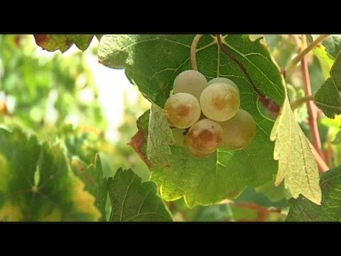 analysis of home in the grapes