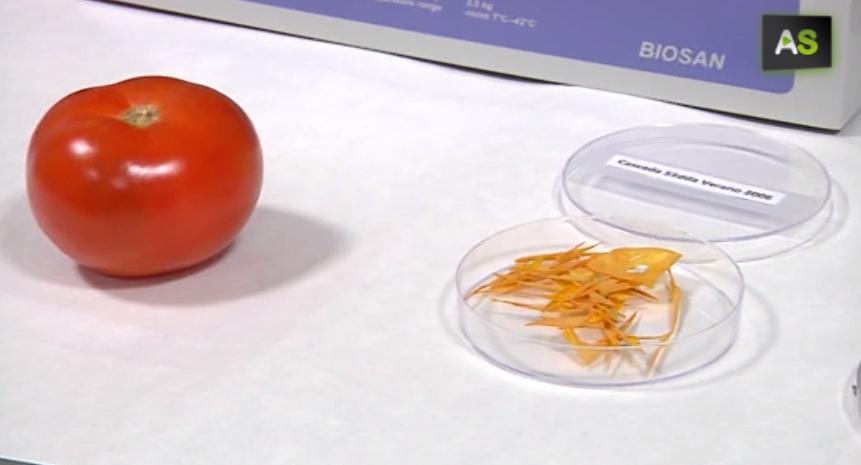plastic tomato
