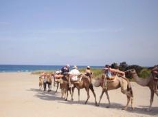 camels-tour