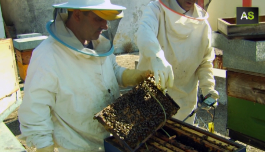 bees-sensors